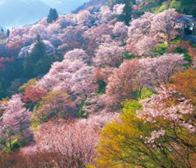 画像:4月 吉野山(奈良) 日本の朝 2018年カレンダー