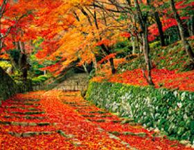 画像:11月 百済寺(滋賀) ザ・日本 2018年カレンダー