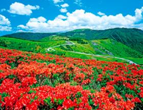 画像:6月 美ヶ原高原(長野) ザ・日本 2018年カレンダー