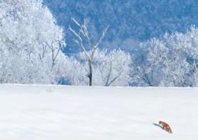 画像:12月 北海道 旭川市江丹別町 フォーエバージャパン 2018年カレンダー