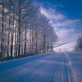 画像:1-2月 霧氷の道(北海道 美瑛町) 四季・前田真三(フィルムカレンダー) 2018年カレンダー