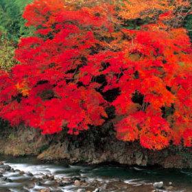 画像:9-10月 川辺の紅樹(愛知県 豊根村) 四季・前田真三(フィルムカレンダー) 2018年カレンダー