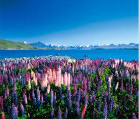 画像:1月 テカポ湖(ニュージーランド) 外国風景 2018年カレンダー