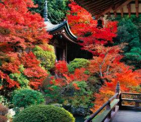 画像:12月 毘沙門堂(京都) 庭・四季詩情 2018年カレンダー