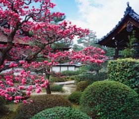 画像:1月 雲龍院(京都) 庭・四季詩情 2018年カレンダー