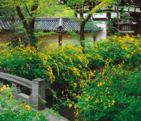 画像:3月 松尾大社(京都) 庭・四季詩情 2018年カレンダー