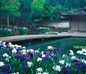 画像:5月 しょうざん(京都) 庭・四季詩情 2018年カレンダー