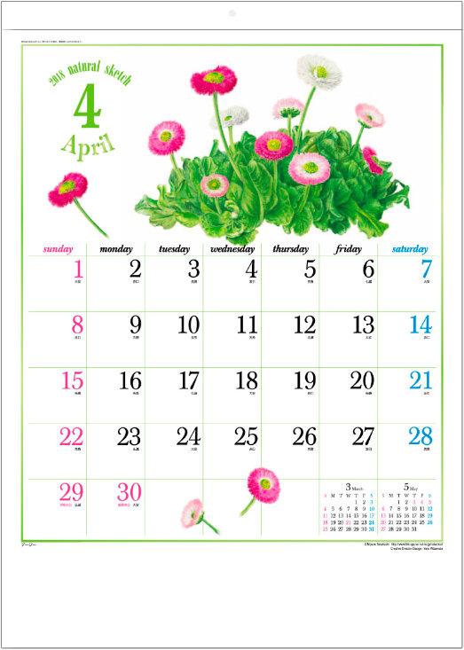 画像:4月 デージー ナチュラルスケッチ 2018年カレンダー