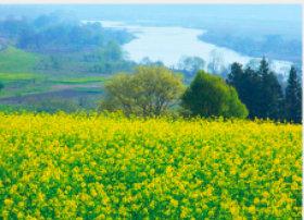 画像:3月 菜の花畑と千曲川(長野) 四季水景 2018年カレンダー