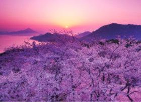 画像:4月 伯方島と桜(愛媛) 四季水景 2018年カレンダー