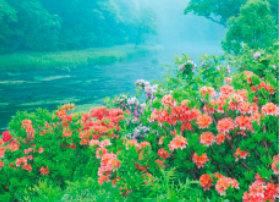 画像:6月 新緑のダダリ沼(青森) 四季水景 2018年カレンダー