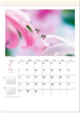 画像:7月 色彩のしずく・浅井美紀作品集 2018年カレンダー