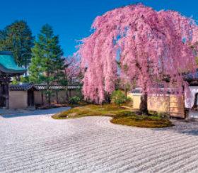 画像:3-4月 高台寺(京都) 庭の心 2018年カレンダー
