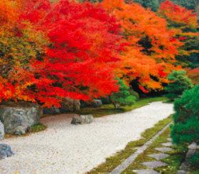 画像:9-10月 天授庵(京都) 庭の心 2018年カレンダー