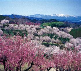 画像:3-4月 桃と桜の花さく里より吾妻連峰を望む(福島) 四季彩峰 2018年カレンダー