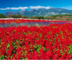 画像:9月 那須フラワーワールド(栃木) 美しき日本 2018年カレンダー