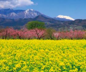 画像:3月 千曲川河川公園(長野) 美しき日本 2018年カレンダー