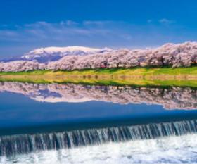 画像:4月 白石川堤一目千本桜(宮城) 美しき日本 2018年カレンダー