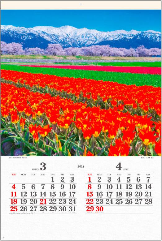 画像:3-4月 朝日チューリップ畑(富山) ワイドニッポン(フィルムカレンダー) 2018年カレンダー