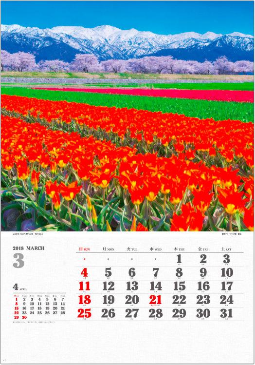 画像:3月 朝日チューリップ畑(富山) ワイドニッポン十二選(フィルムカレンダー) 2018年カレンダー