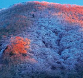 画像:1-2月 黒檜山(群馬) 川隅功作品集(フィルムカレンダー) 2018年カレンダー