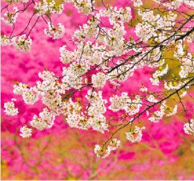 画像:3-4月 長瀞町(埼玉) 川隅功作品集(フィルムカレンダー) 2018年カレンダー