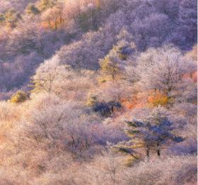画像:11-12月 高ボッチ高原(長野) 川隅功作品集(フィルムカレンダー) 2018年カレンダー