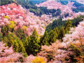 画像:4-5月 吉野山(奈良) 彩り日本(12月はじまり) 2018年カレンダー