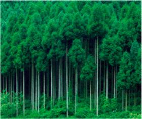 画像:11-12月 京都市北区(京都) 美しい緑 2018年カレンダー