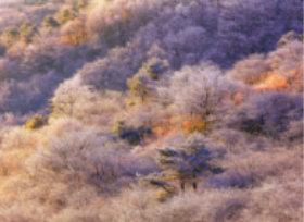 画像:12月 高ボッチ高原(長野) 川隅功作品集 2018年カレンダー