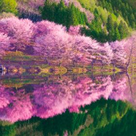 3-4月 中綱湖(長野) 美しい水辺(フィルムカレンダー) 2018年カレンダーの画像