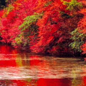 画像:9-10 白駒の池(長野) 美しい水辺(フィルムカレンダー) 2018年カレンダー
