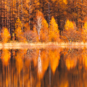 画像:11-12月 小田代原(栃木) 美しい水辺(フィルムカレンダー) 2018年カレンダー