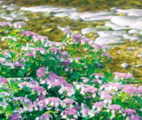 画像:5-6月 板取川(岐阜) せせらぎの詩(フィルムカレンダー・小) 2018年カレンダー