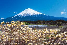 画像:3-4 早春の山麓(静岡) 富士の四季 2018年カレンダー