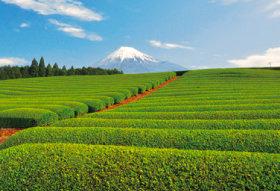 画像:5-6月 新緑の茶畑(静岡) 富士の四季 2018年カレンダー