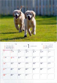 画像:1月 ゴールデン・レトリーバー Dog&Cat 2018年カレンダー