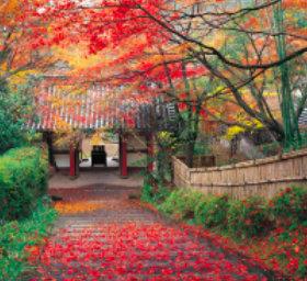 画像:11月 金蔵寺(京都) 日本の美 2018年カレンダー