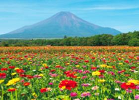 画像:7月 山中湖村より(山梨) 富士十二景 2018年カレンダー