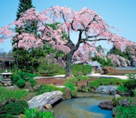 画像:正法寺(京都) 四季の庭 2019年カレンダー