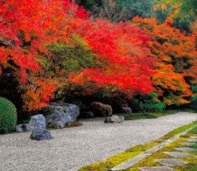 画像:京都 天授庵 四季の庭 2019年カレンダー