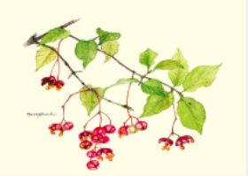 画像:ツリバナ ボタニカルアート 2019年カレンダー
