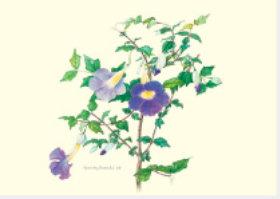 画像:ヤハズカズラ ボタニカルアート 2019年カレンダー