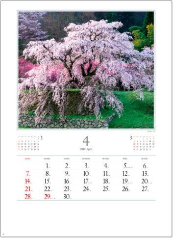 画像:奈良県 宇陀市大宇陀本郷の又兵衛桜 日本の朝 2019年カレンダー