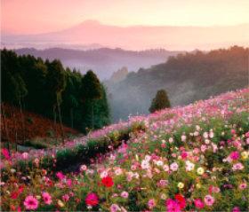 画像:熊本県 南小国町 日本の朝 2019年カレンダー