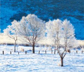 画像:長野県 霧ヶ峰高原の雪原 日本の朝 2019年カレンダー
