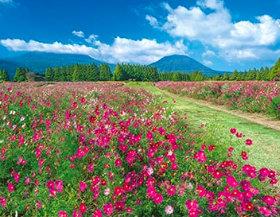 画像:宮崎県 生駒高原 ザ・日本 2019年カレンダー