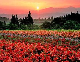 画像:新潟県 花き公園のユリ ザ・日本 2019年カレンダー