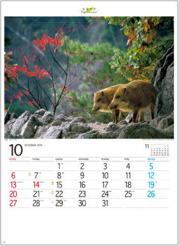 画像: フォーエバージャパン 2019年カレンダー
