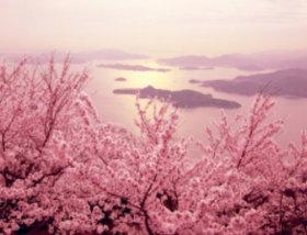 画像:静岡県 みなみの桜 彩り日本(12月はじまり) 2019年カレンダー